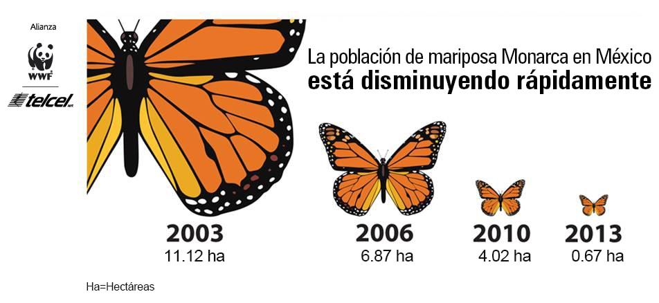 La migración de la mariposa Monarca en riesgo de desaparecer.